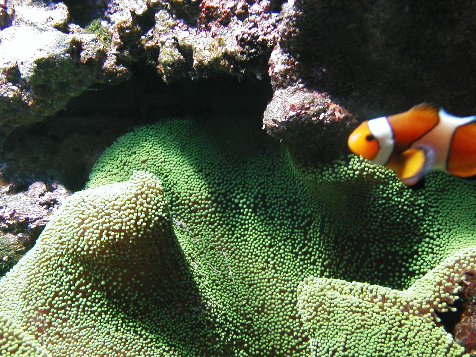 stockvault-aquarium95752